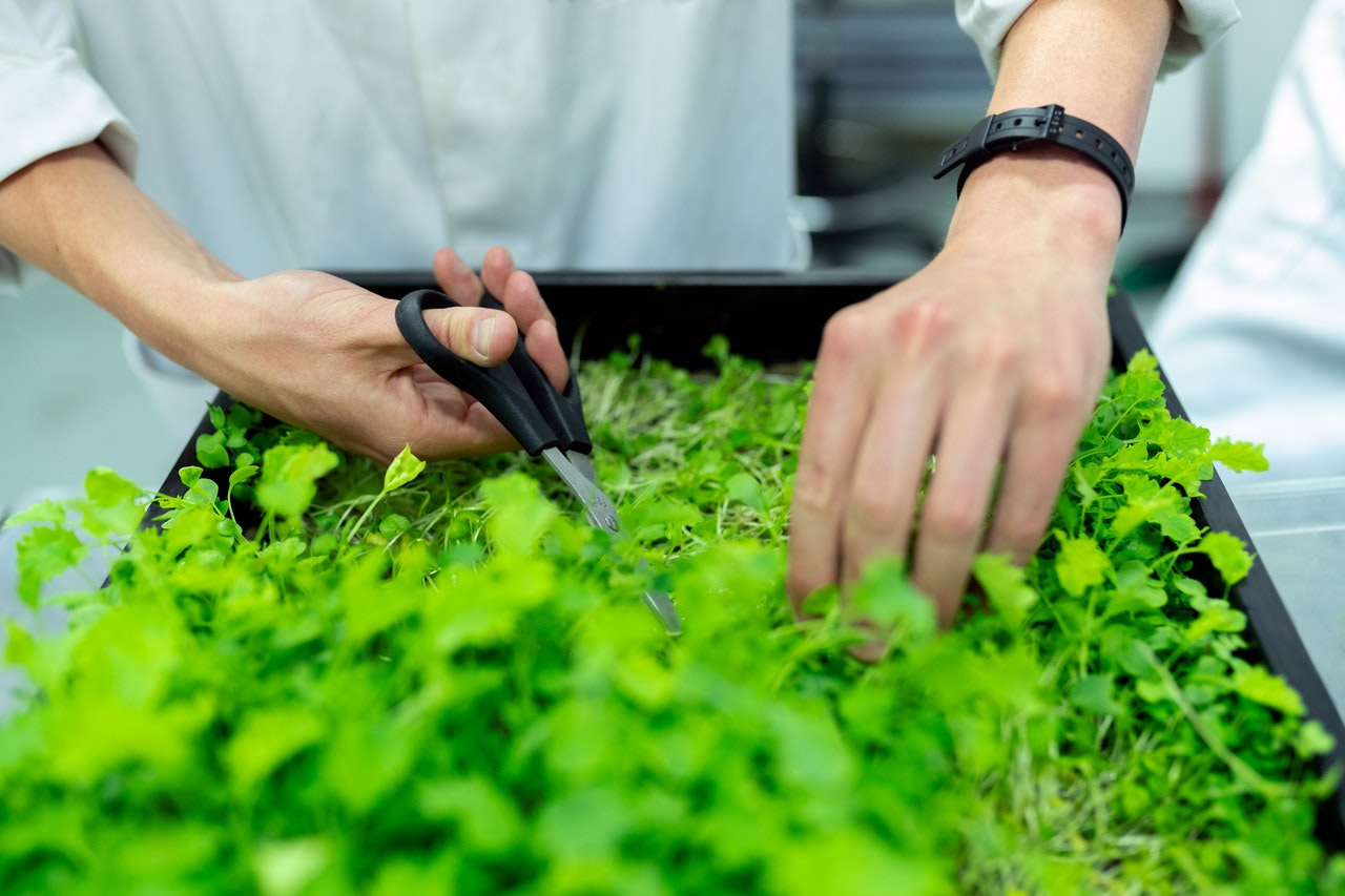 Food science is important to meet the growing demands of the current market